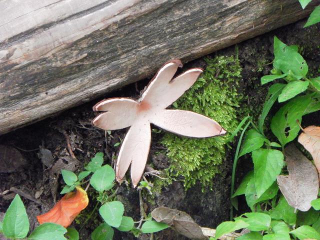 rare mushroom