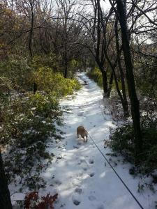 The icy trail
