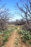 Tasajillo Trail