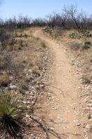 Javalina Trail