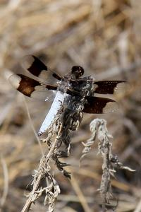 Dragonfly on the Trail
