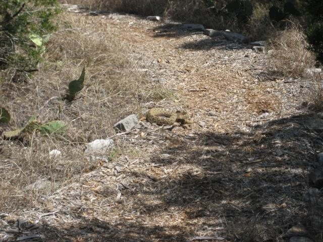 Rattlesnake on the Cactus Rock trail 29 Mar 2014
