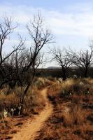 A portion of Turkey Creek Trail