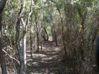 Shady Trail Tunnel