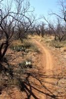 Badlands Trail Beginning