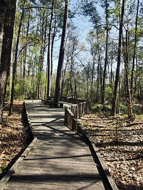 Boardwalk on the Piney Woods Loop