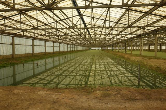 Aquatic Greenhouse