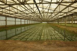 Aquatic Greenhouse
