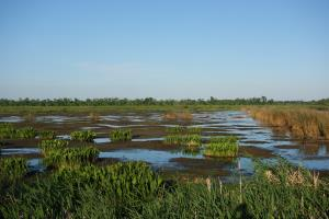 View Of The Marsh