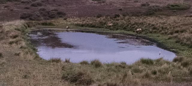 Elk Pond