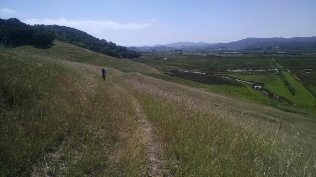 Marsh Overlook