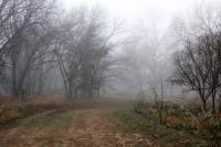 A Rare Foggy Morning