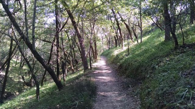 Shady Trail