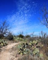 Scenery on the Trail