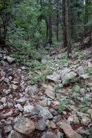 Another View Of The Trail