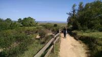 Trail segments closer to shore flatten out and the sky opens up. San Pablo Bay can be seen in the distance.