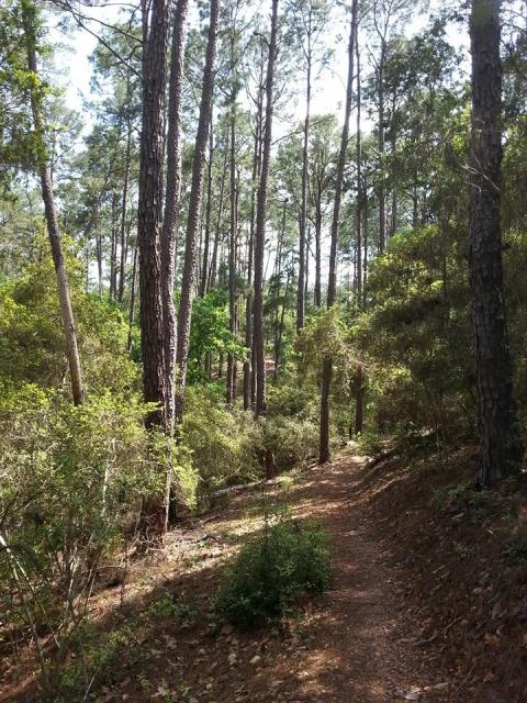 Pine Gulch trail