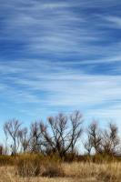 Trees along the North Concho