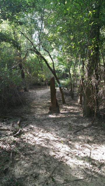 Sandy Trail in Sandyland