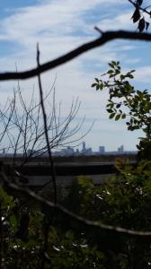 Austin skyline as seen from the back upper trail