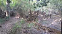 Slough in creek bottom
