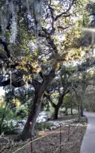 A shady tunnel with Spanish moss