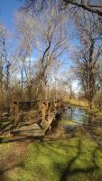 Bridge & Nice Little Swamp