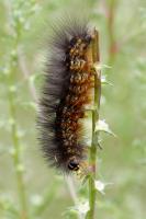 One of Many on the Tumbleweeds