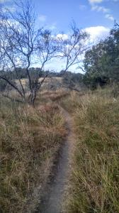 More typical Hill Country Vegetation further in