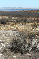 More of the Burned Area