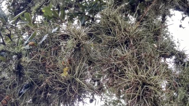 Mossy and lichenous