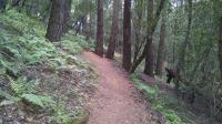 Steves' S Trail