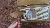 Botanical signage--Blackjack Oak
