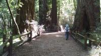 The Redwood Grove Loop Trail features some of the park's biggest trees, an easy trail and interpretive signs.