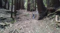 Redwoods everywhere