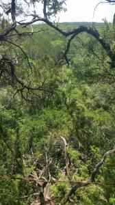 Dante Trail in Purgatory