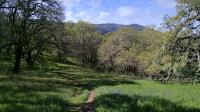 Looking back on the Woodland Star Trail towards Sonoma Mountain in the distance.
