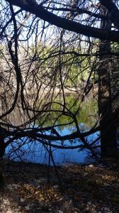 Serene Loop pond