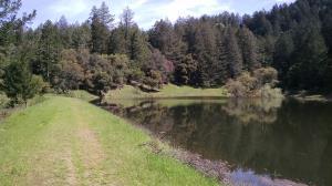 Merganser Pond