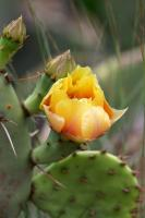 First Cactus Flower of the Year