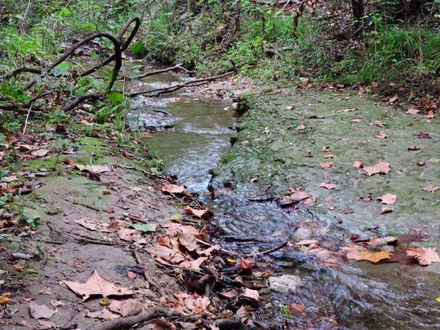 blunn creek