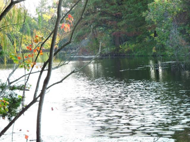 part of walnut creek