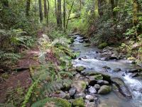 At times Redwood Trail gets really close to the creek.