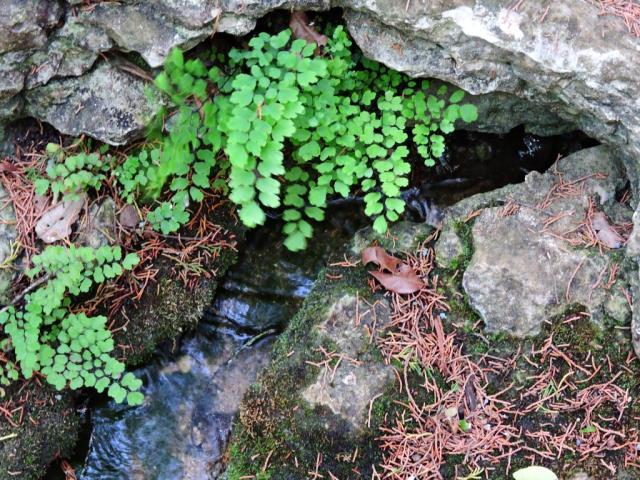 fresh water spring