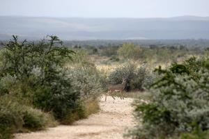 A Deer Crossing
