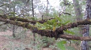 Fern growing in a tree