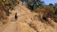 Coppertone Ascending