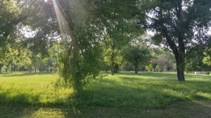 The former neighborhood--tall trees, no brush--very park-like