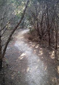 Trail through a Cedar Brake