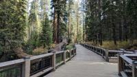 The Mariposa Grove boardwalk is well done and makes for easy access to part of the trail. The Fallen Monarch can be seen parallel to the boardwalk on the left.